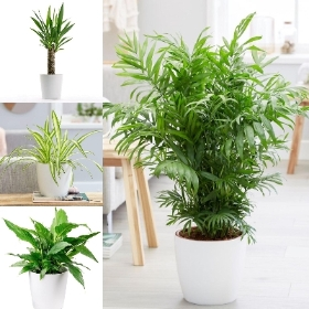 Houseplant starter package
